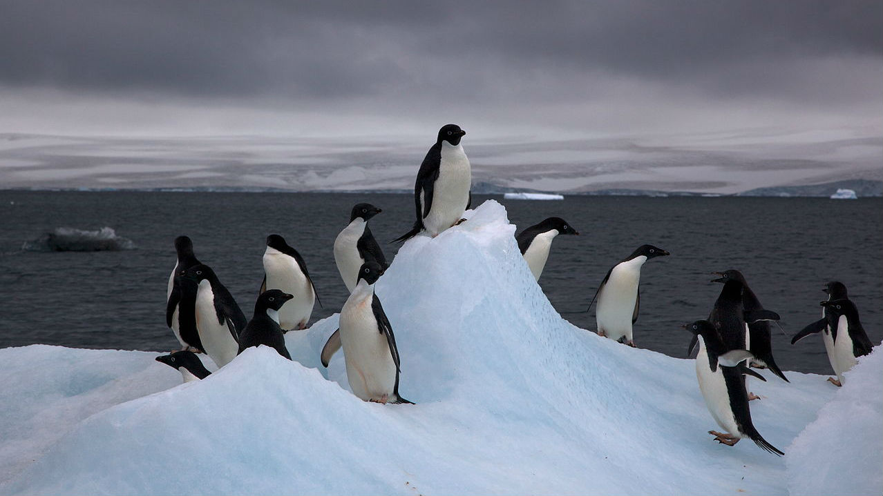 Antartic Ice 1